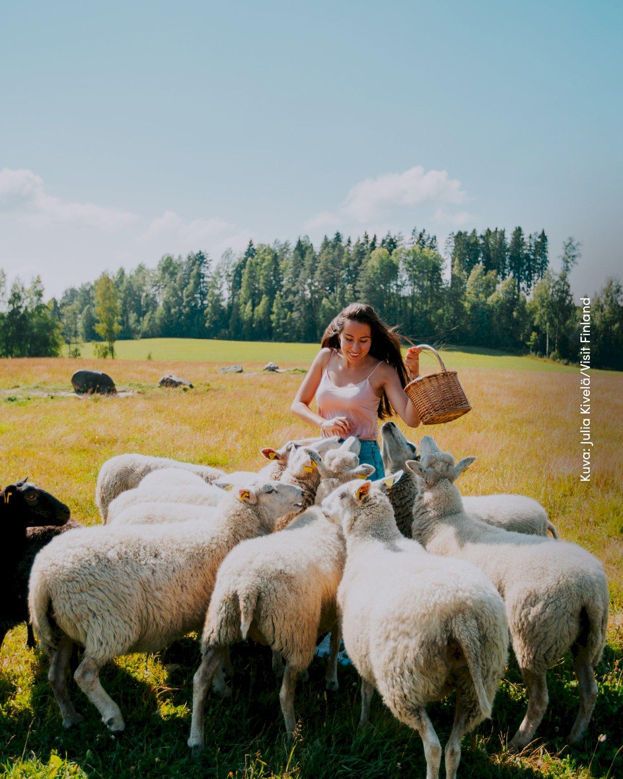 Nainen ruokkii lampaita pellon keskellä.