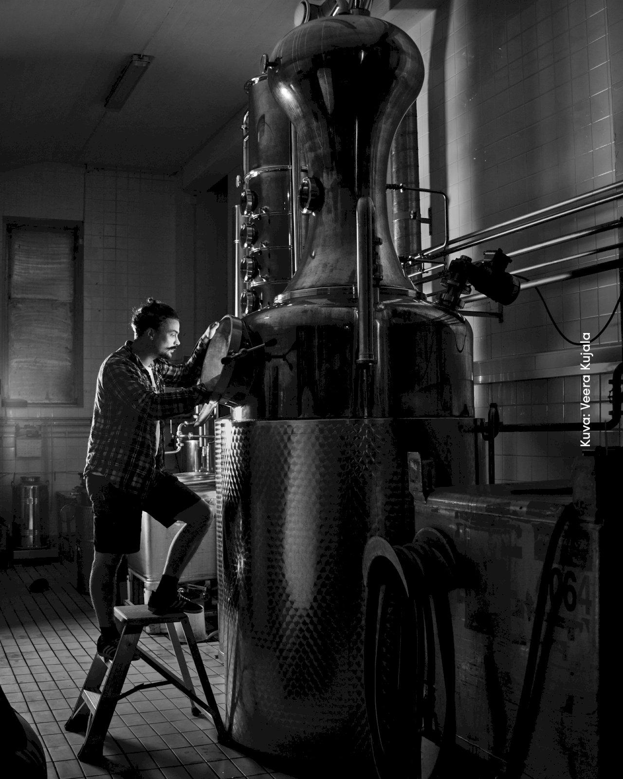 Mies tislaa giniä Kyrö Distilleryn tislaamossa.
