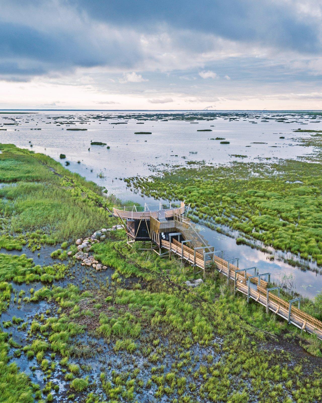 Pitkospuureitti johtaa kosteikossa puiselle lintutornille Liminganlahdella.