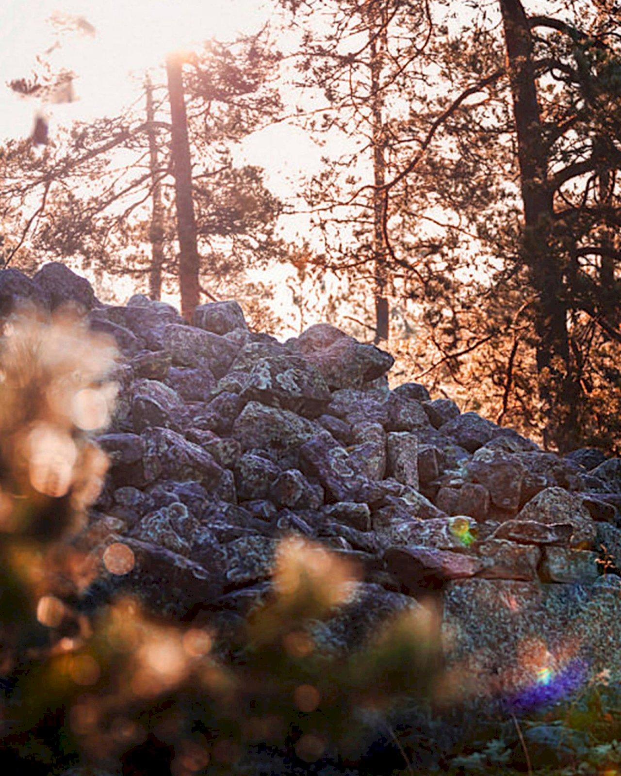Sammallahdenmäen kiviset hautaröykkiöt mäntyjen lomassa.
