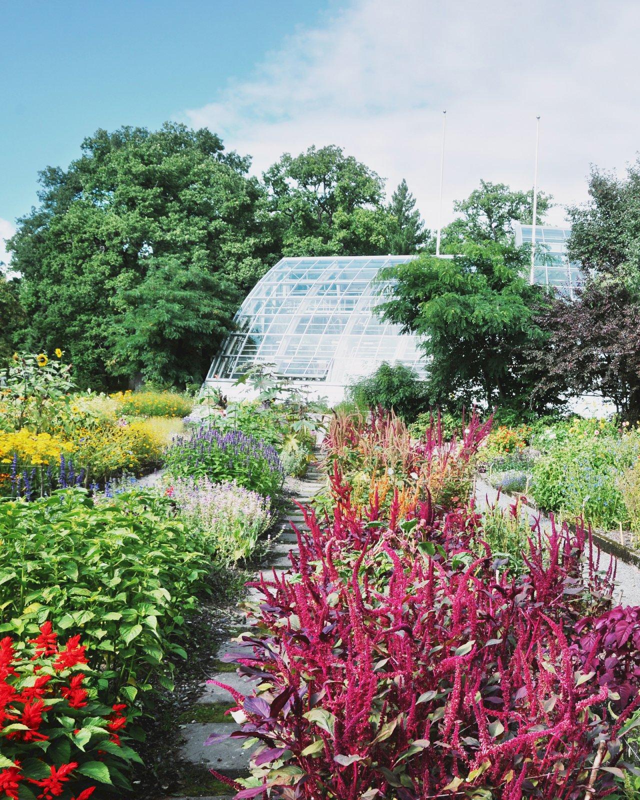 Värikkäitä kasveja ja kukkia Ruissalon kasvitieteellisen puutarhan ulkopuutarhassa.