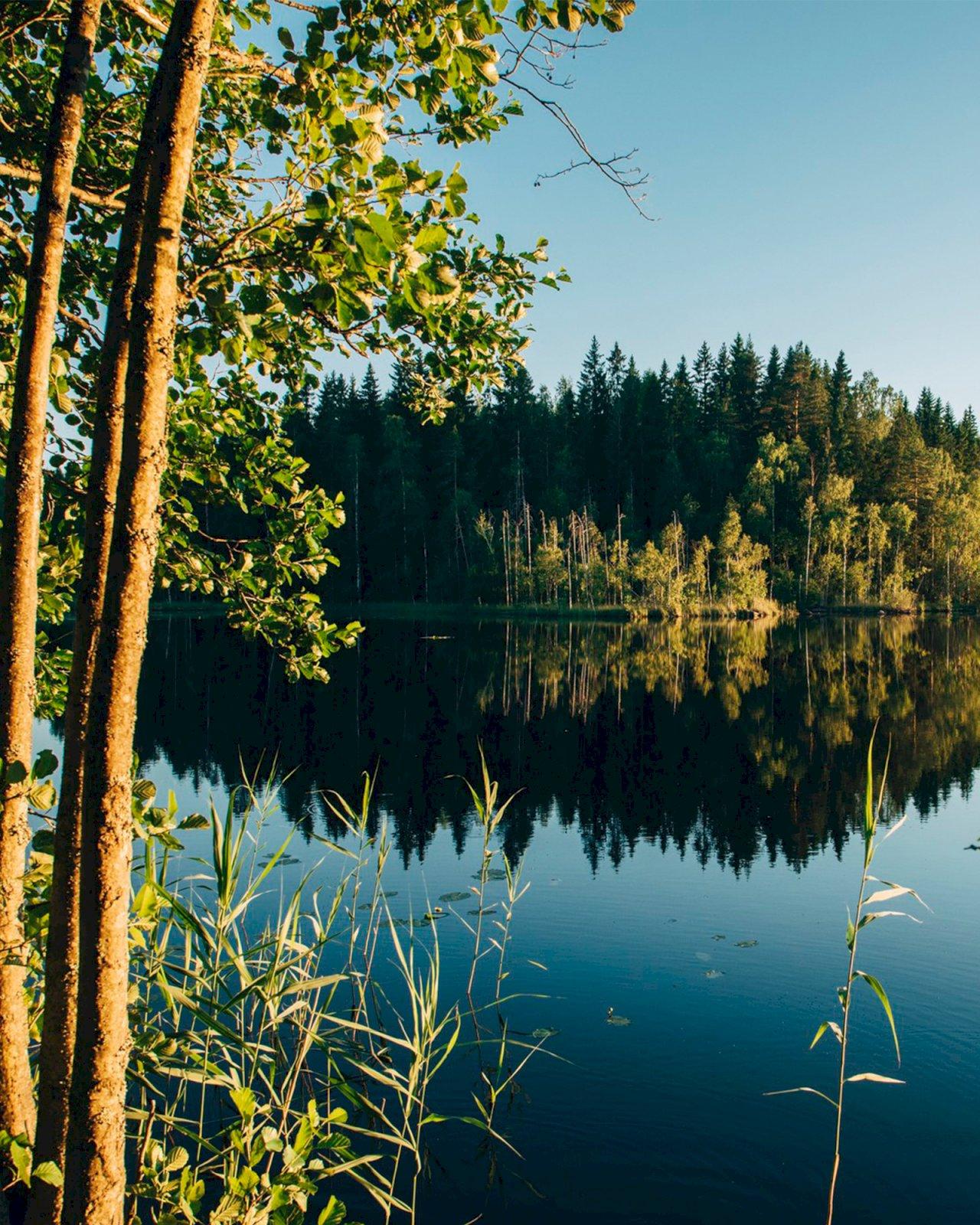 Kesäinen järvimaisema Lapakistossa, Lahdessa.