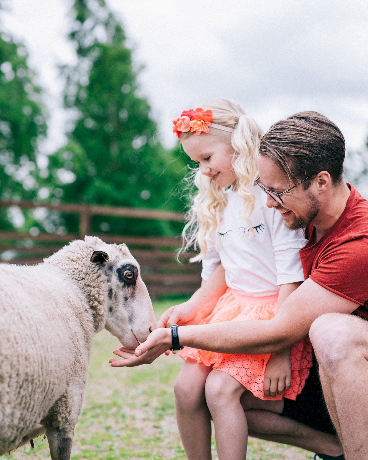 Mies ja tyttö syöttävät lammasta Wanhan Markin pihapiirissä Etelä-Pohjanmaalla.